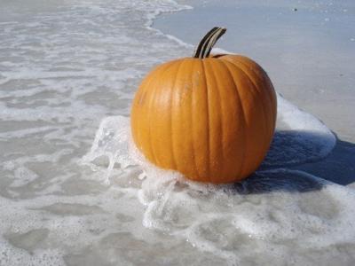 Happy Shelloween beached pumpkin