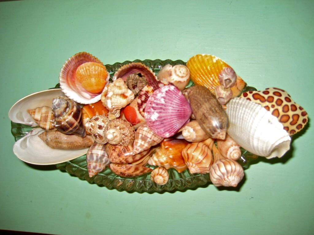 Deb's Shells from Saturday Night