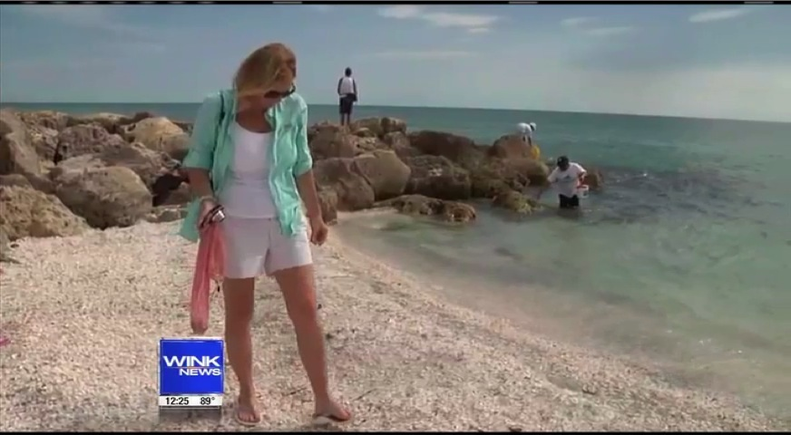 i Love Shelling on TV!