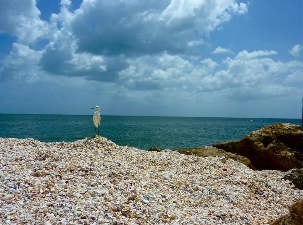 Shelling on South Seas Island Resort
