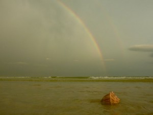 Whelk under the Rainbow