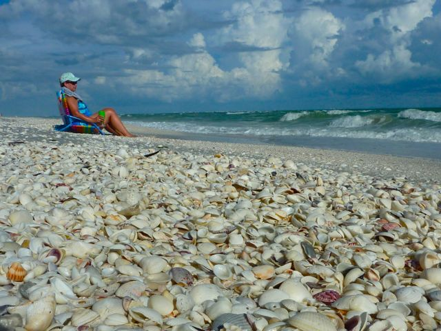 Relaxing among seashells on the beach combing with blue skies and sunshine