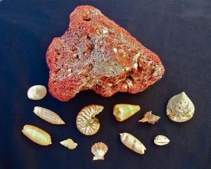 Bali best shells