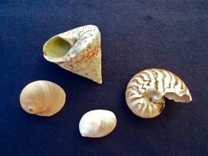 Bali mixed shells