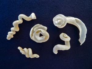 Bali worm shells