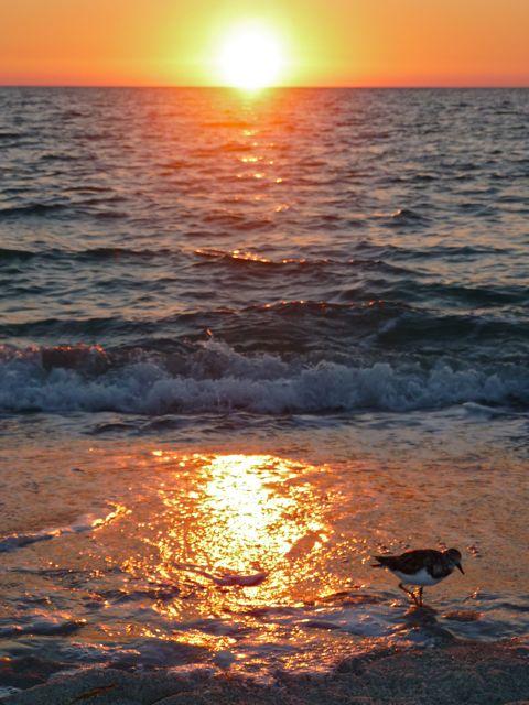 Green Flash Sunset Video