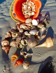 Beach combing shell bucket