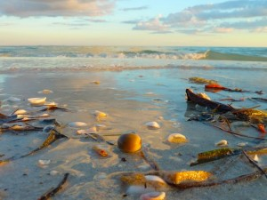 Sea Bean with waves on Sanibel