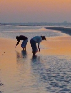 Shell seekers sunrise Sanibel