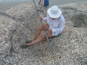 Cheryl digging for shells