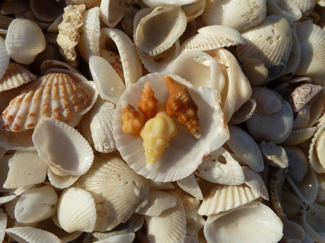 Sanibel Christmas Eve Seashell Style