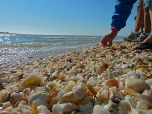 Picking Seashells