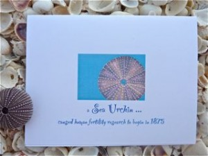 Sea Urchin Note Card
