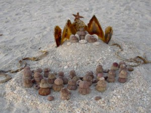 Seashell Nativity