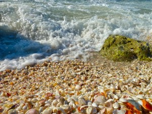 Seashell beach on Captiva Island, Florida