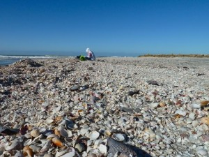 Seashell collecting on Captiva