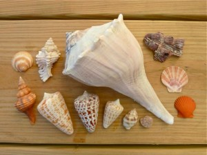 Seashell collection Dec 2010