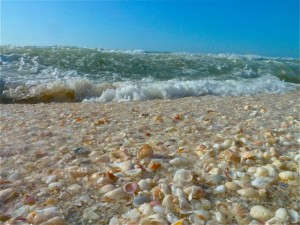 Seashells and waves