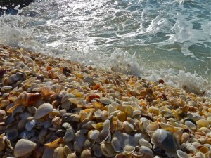 Seashells line the beach