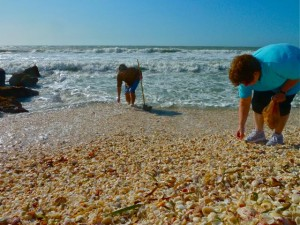 Shell collecting on Captiva