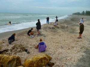 Shell excavation on Captiva