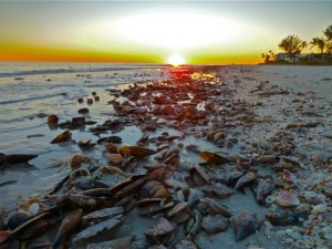 Sunset on shell wrack
