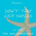 no live shelling