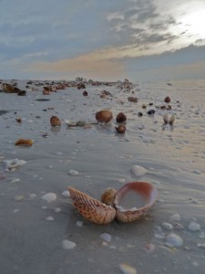 Shell Treasures on the beach