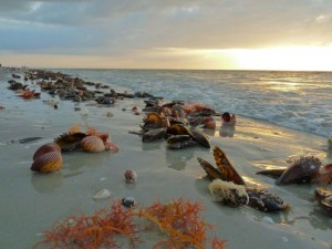Cockle shells at sunrise