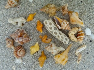 Ellen's miniature shells