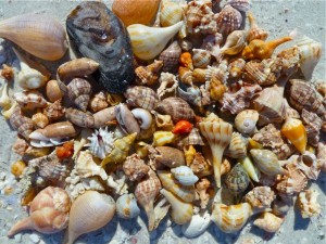 Today's shell collection