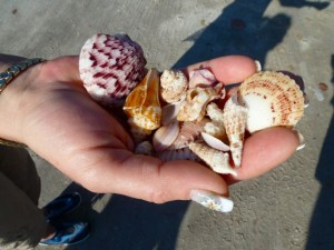Ann's handful of shells
