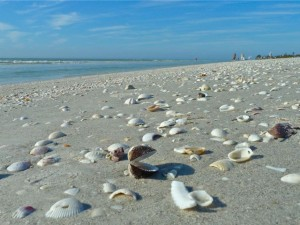 Beached Clams