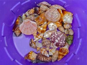 Eddy's shell bucket