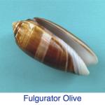 Fulgurator Olive
