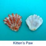 Kittens Paw Shell ID