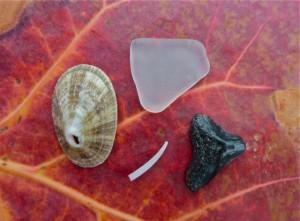 Limpet seaglass tusk shells