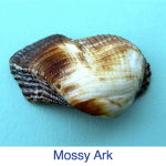 Mossy Ark Identification