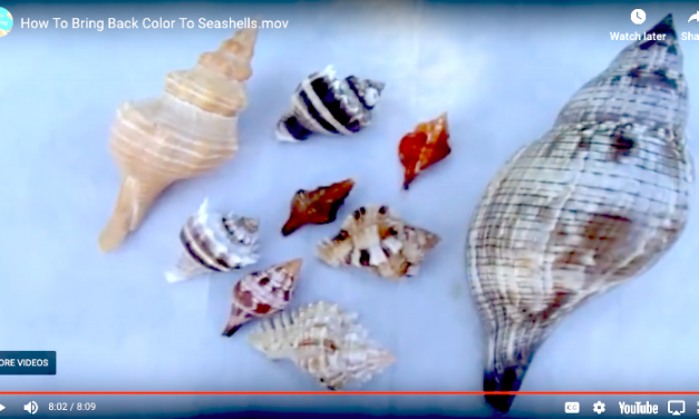 How To Restore Color To Your Seashells Tutorial