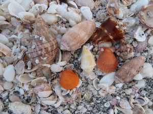 Shells in 5 minutes