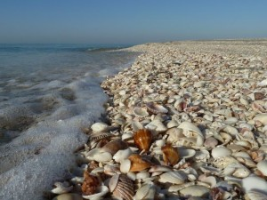 Shells on Captiva beach