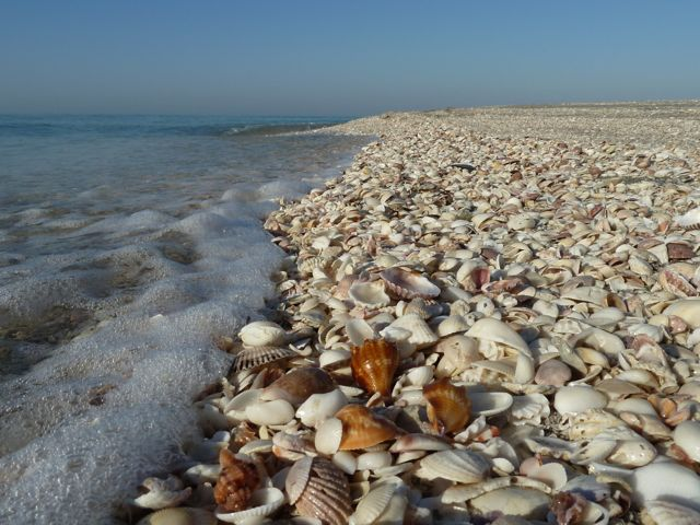 Sanibel Island Shells: I Love Shelling