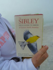 Sibley bird book