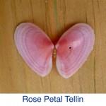 Tellin - Rose Petal