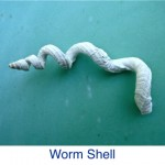 Worm Shell ID