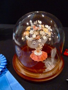 Brandy Llewelyn shell fair winner