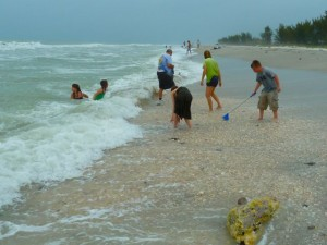 Captiva Seashell frenzy