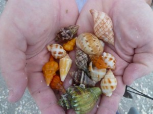 Captiva seashells