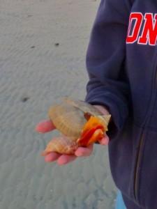 Diana's seashells