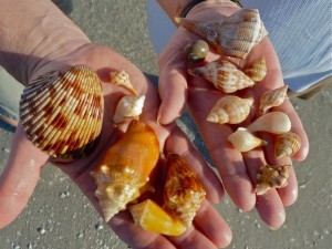 Hands of seashells